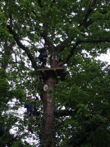 4. Grimper aux arbres
